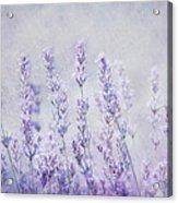 Lavender Romance Acrylic Print