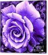 Lavender Rose With Brushstrokes Acrylic Print