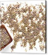 Lavender Seeds Acrylic Print