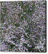 Lavender Silver Lining Acrylic Print