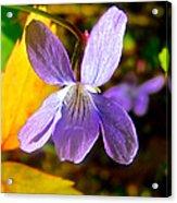 Lavender Violet Along John's Lake Trail In Glacier Np-mt Acrylic Print