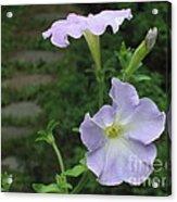 Lavender Whisper Acrylic Print