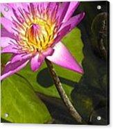 Lavillita_flower 10116 Acrylic Print