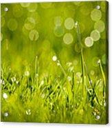 Lawn Twinklers Acrylic Print