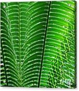 Layered Ferns I Acrylic Print