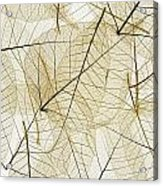 Layered Leaves Acrylic Print by Kelly Redinger