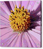 Layers Of A Cosmos Flower Acrylic Print