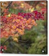 Layers Of Autumn Red Acrylic Print