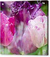 Layers Of Tulips II Acrylic Print