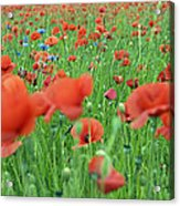 Laying In The Poppy Field Acrylic Print