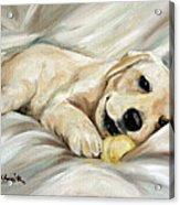 Lazy Bones Acrylic Print