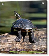 Lazy Day On A Log 6241 Acrylic Print