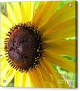 Lazy Susan Flower Variety Acrylic Print