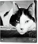 Le Cat Acrylic Print by Andee Design
