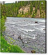 Le Hardy Rapids Of Yellowstone River In Yellowstone River In Yellowstone National Park-wyoming   Acrylic Print
