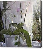 Le Orchidee Sfumate Acrylic Print