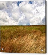 Leaden Clouds Over Field Acrylic Print
