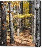 Leading To Autumn Acrylic Print