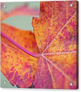 Leaf Abstract In Pink Acrylic Print