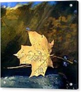 Leaf Afloat Acrylic Print