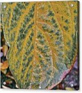 Leaf After Rain Acrylic Print