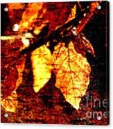 Leaf And Light Abstract Acrylic Print by Natalie Kinnear