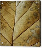 abstract Leaf Acrylic Print