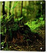 Leaf Bud Acrylic Print