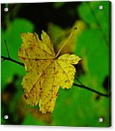Leaf Caught On A Branch Acrylic Print