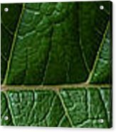 Leaf Close Up Acrylic Print