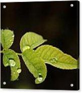 Leaf Acrylic Print by Cora Brum