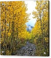 Leaf Covered Rocky Road Acrylic Print