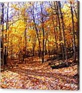 Leaf Covered Trail Acrylic Print