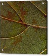 Leaf Design I Acrylic Print