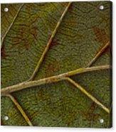 Leaf Design II Acrylic Print