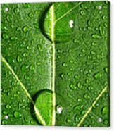 Leaf Dew Drop Number 10 Acrylic Print