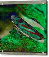 Leaf Hopper Acrylic Print
