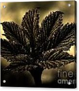 Leaf In A Special Light Acrylic Print