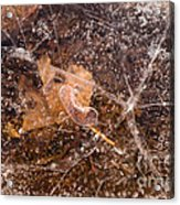 Leaf In Ice Acrylic Print by Anne Gilbert