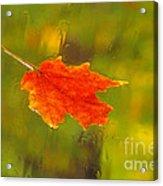 Leaf In Rain Acrylic Print