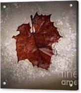 Leaf In Snow Acrylic Print