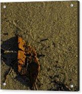 Leaf Acrylic Print by Jennifer Burley