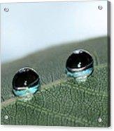 Leaf Jewels Acrylic Print