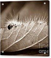 Leaf Muncher Acrylic Print