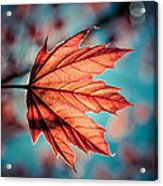 Leaf Of Light Acrylic Print