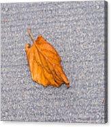Leaf On Granite 1 Acrylic Print