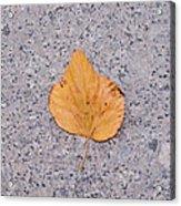 Leaf On Granite 2 - Square Acrylic Print
