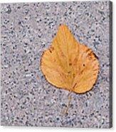 Leaf On Granite 2 Acrylic Print