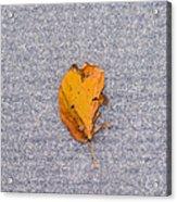 Leaf On Granite 3 - Square Acrylic Print