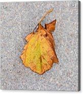 Leaf On Granite 4 - Square Acrylic Print